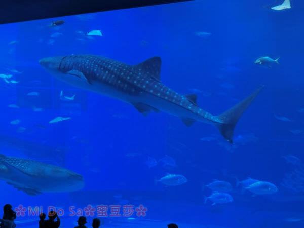 沖繩親子自由行∣美麗海水族館-省時參觀攻略~必看