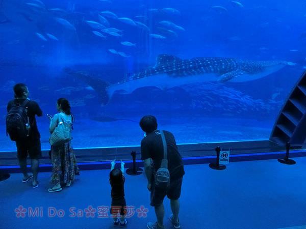 沖繩親子自由行∣美麗海水族館 沖繩必排景點 黑潮之海